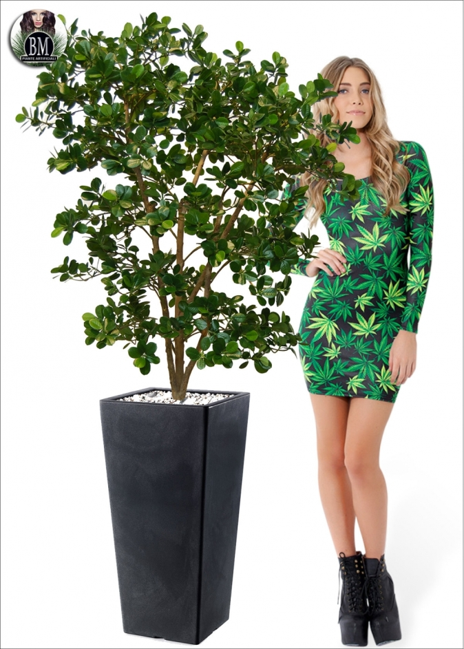 bamboo-wild-bush
