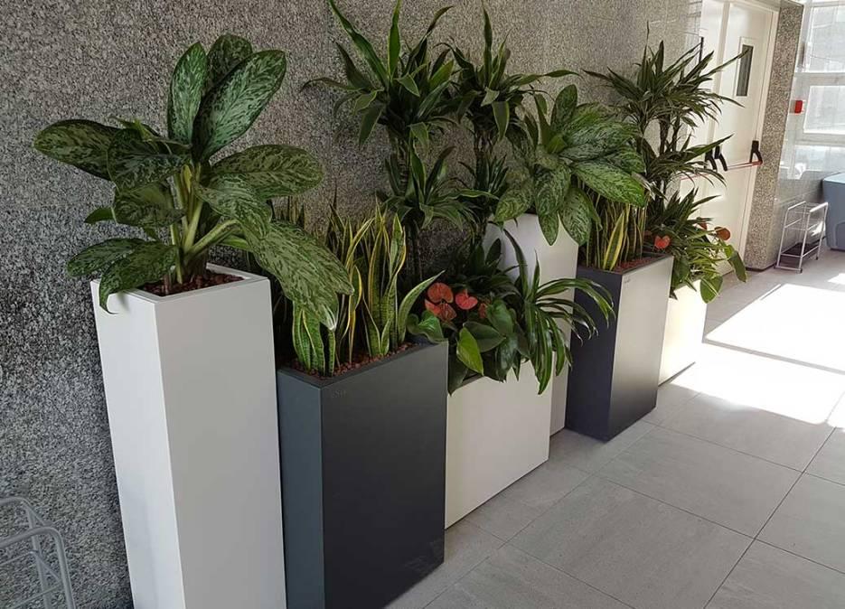 piante-artificiali-bmp