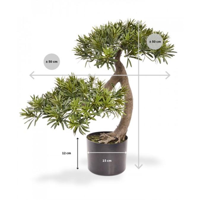 140006_podocarpus_bonsai_55_maat-100